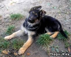 Причём при слове собака образ немецкой овчарки приходит сам собой, ещё с детства